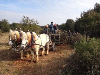 Séchebec chantier débardage à cheval 2015 © CEN-PC