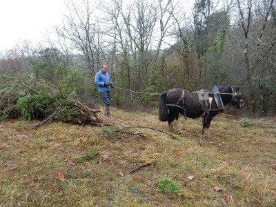 Vallée des Eaux Claires débardage cheval 2015 © CEN-PC