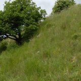 OPP Coteaux d'Availles-Thouarsais n°07 - Mai 2008 © CEN-PC