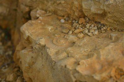 Fossiles © C. Auburtin