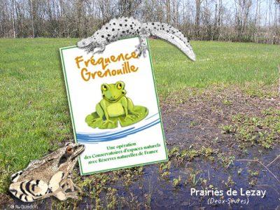 Lezay - Fréquence Grenouille © CEN-PC