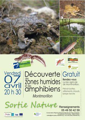 affiche sortie Fréquence Grenouille à Montmorillon