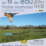 affiche sortie prairie mothaise (79)