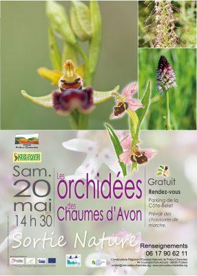 affiche sortie orchidées, chaumes d'Avon (79)