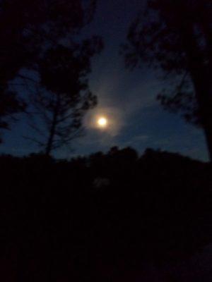 Sortie nocturne à Touvérac © CEN-PC